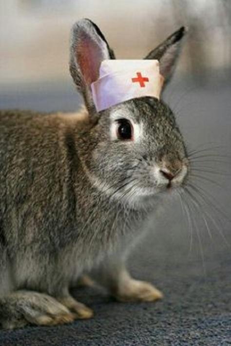 Christian Rabbits