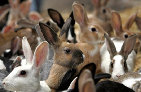 Denominational Non- Denominational Rabbiits and Orthdox Rabbits in gathering to fellowship