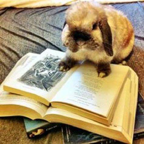 Marry Baker Eddy Metaphor - Mary Bakar Eddit Bunny studying up on her bible and educational texts