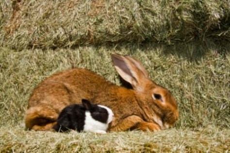Mary Baker Eddie and Joseph Smith metaphor rabbits