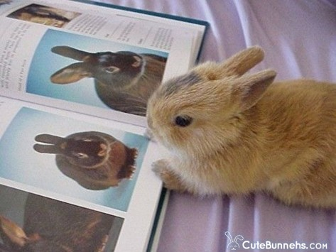 The Rabbit Bible for Children